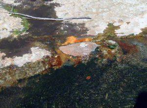 自然湧出する温泉芹川川床 阿蘇4火砕流堆積物の亀裂から湧出