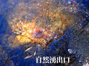 阿蘇4火砕流堆積物の亀裂から自然湧出する温泉 白く見えるものがガス成分褐色の付着物質は石灰華
