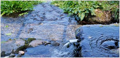 久住山が育む豊かな水が長湯温泉郷の美味しい食材を育みます。
