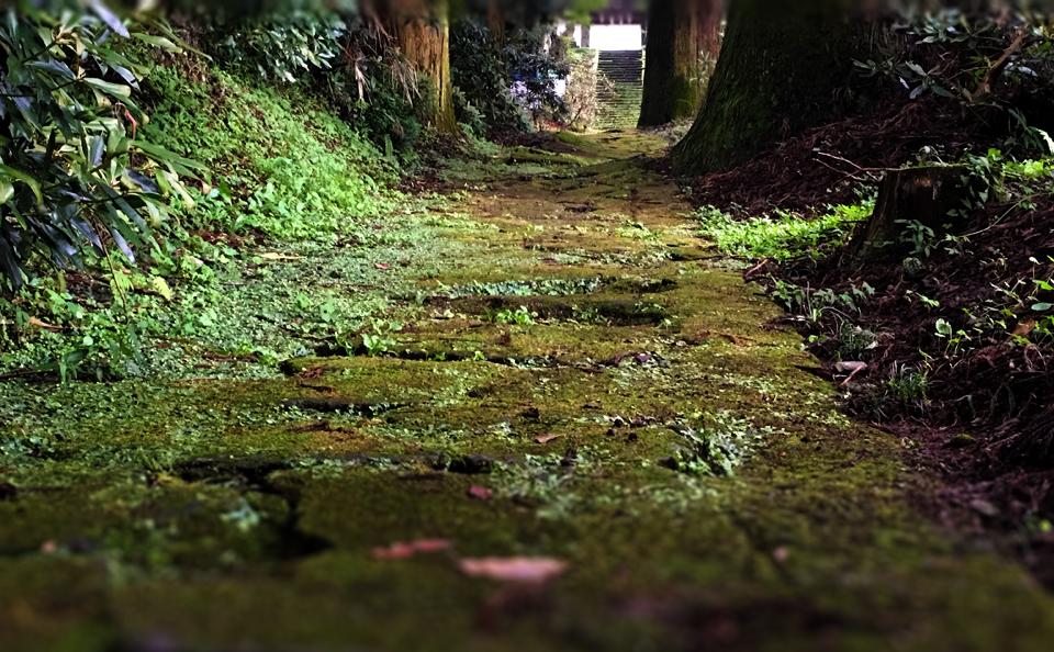 籾山八幡社「直入物部神社」の参道