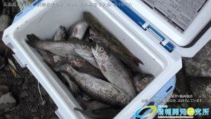 渓流釣り大会 ニジマス