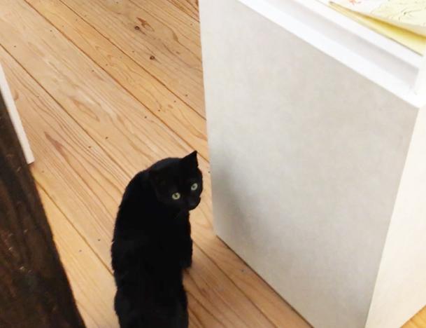 ラムネ温泉館のクロ猫1