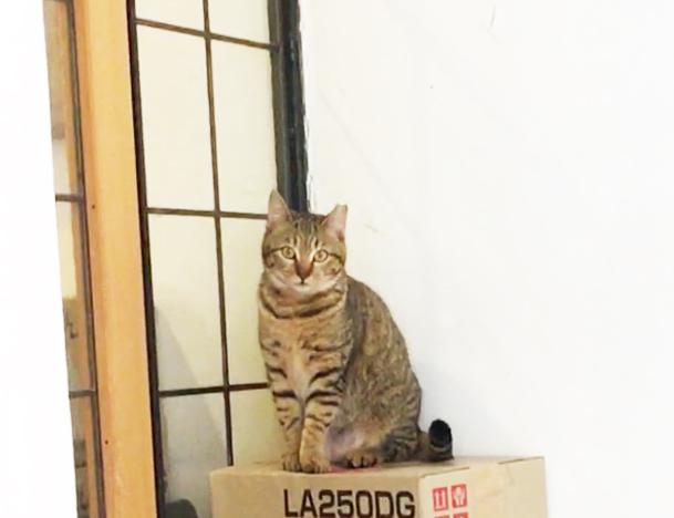 ラムネ温泉館の猫3