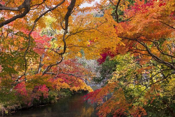 温泉地湯布院(由布院)の金鱗湖 紅葉写真